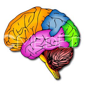 brain280x280