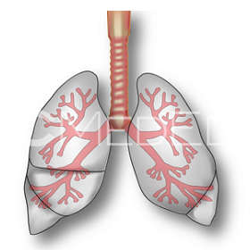 lungs280x280